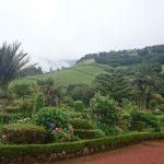 botanicka zahrada Sao Migueal